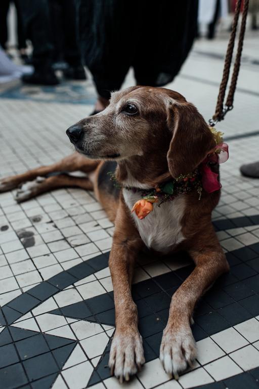Trauung in der Wilhelma Stuttgart Hund